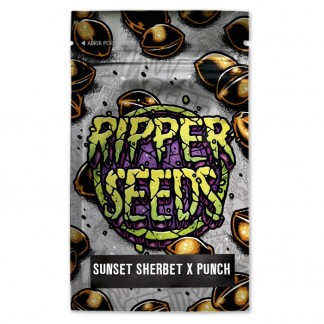 Sunset Sherbet x Purple Punch