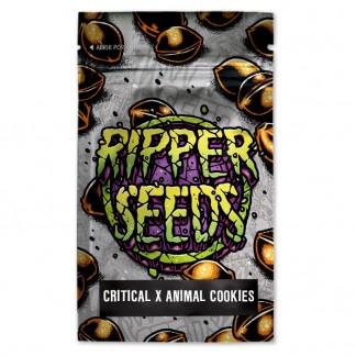 Critical x Animal Cookies